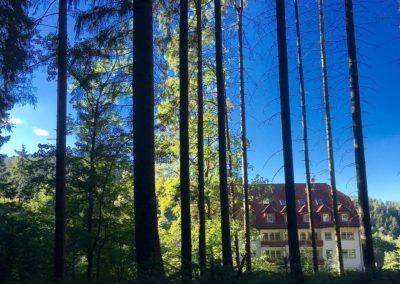 Muehle_hinten_Wald